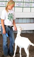 NortheastNebNewsCo_CedarCountyFair_GoatShow.MichaelaLange_071913_16