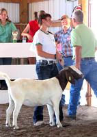 NortheastNebNewsCo_CedarCountyFair_GoatShow.LaceySchindler_071913_03